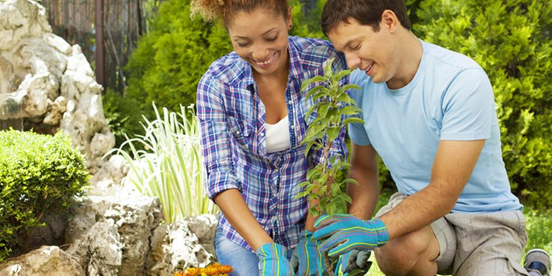 Energy-Smart Landscaping for Your Home